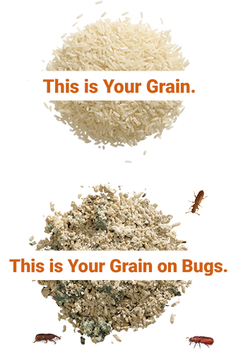This is your grain. This is your grain on bugs.